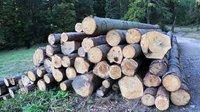 Včeských lesích se vytěžilo rekordní množství dřeva - anotační obrázek