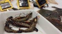Krevety na českém trhu