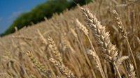 Zemědělci se vrhají do investic. Využívají výhodné úvěry i státní dotace - anotační obrázek