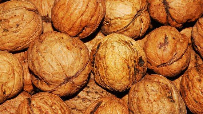 Ořechy, ilustrační fotografie