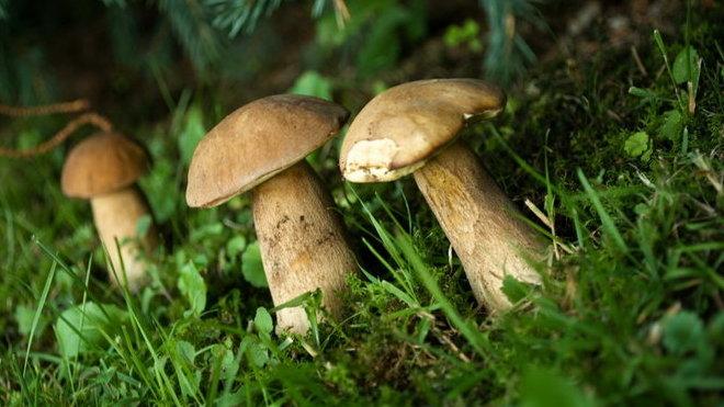 Za houbaření i vycházky lesem hrozí pokuta až 30 tisíc - anotační foto