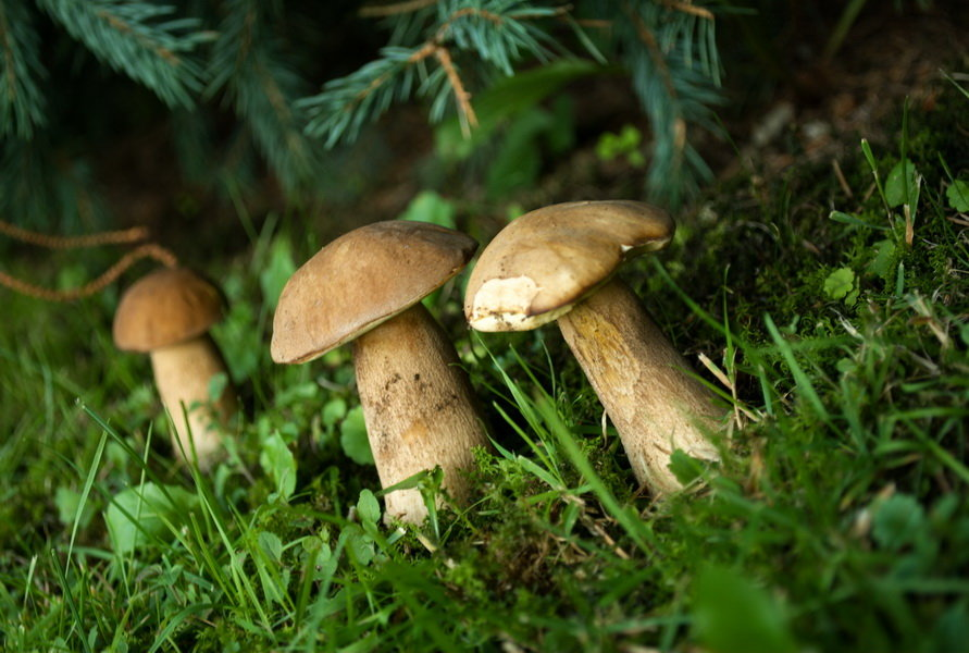 Nový zákon může houbařům pobyt v lese pořádně prodražit - anotační foto