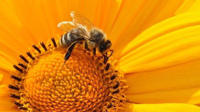 Včela, Ilustrační fotografie