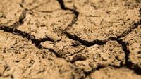 Počasí: Letošní sucho se ozvalo nezvykle brzy. Pokud nezaprší, přijdou obrovské problémy - anotační obrázek