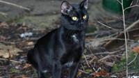 Černá kočka, ilustrační fotografie