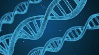 DNA, ilustrační fotografie