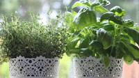 Toužíte po čerstvých voňavých bylinkách, ale nemáte zahrádku? Pěstujte je za oknem - anotační obrázek