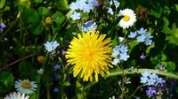 Pylová sezóna je tu. Jak vyzrát na příznaky alergie? - anotační obrázek