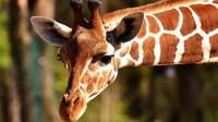 Kapacita zoo a botanických zahrad se navýší už ve čtvrtek - anotační obrázek