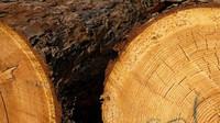 Certifikované dřevo dovážíme ze zahraničí, zatímco české hnije na skládkách - anotační obrázek