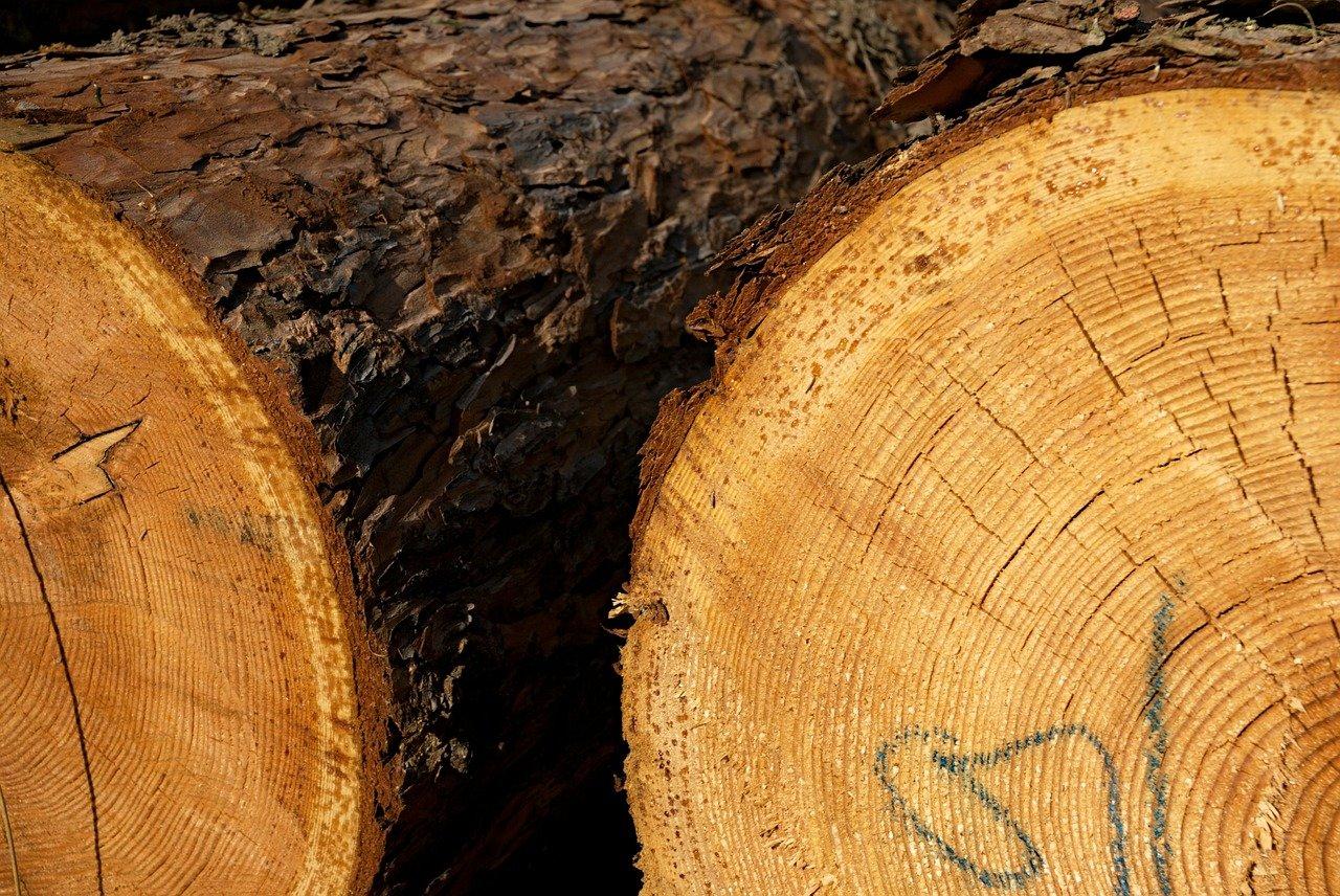 Rakousko chce omezit dovoz elektřiny a plynu spalováním dřeva - anotační obrázek
