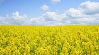Povinné přimíchávání biopaliv do benzinu a nafty zrušeno nebude - anotační obrázek