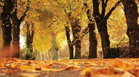 Předpověď počasí na noc a středu 21. října - anotační obrázek