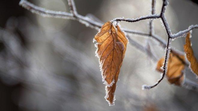 Podzim se nevzdává. Předpověď počasí na noc a pondělí 16. prosince - anotační obrázek