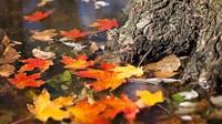 Předpověď počasí na noc a sobotu 24. října - anotační obrázek