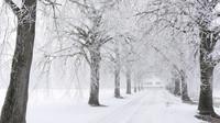 Předpověď počasí na noc a úterý 23. ledna - anotační foto