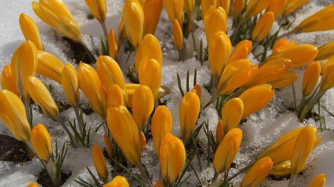 Předpověď počasí na noc a sobotu 24. března - anotační obrázek