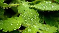 Předpověď počasí na noc a pátek 20. července - anotační foto