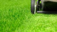Sečete (ne)ochotně sekačkou trávu? Pozor, tohle všechno se může stát - anotační obrázek