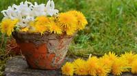 Zahrada v květnu: Co všechno musíme udělat? - anotační foto