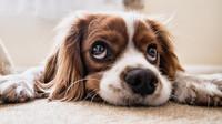 Sněmovna možná schválí zpřísnění trestů za týrání zvířat - anotační obrázek