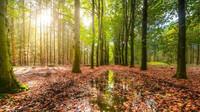 Muž omdlel v práci, šéfová ho nechala umřít v lese - anotační obrázek