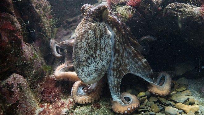 Žijí na Zemi tvorové z jiného světa? Vědci zjistili šokující věc - anotační obrázek