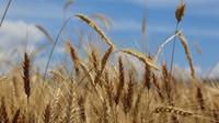 Svaz: EK by měla zveřejnit dopady strategií, potraviny asi zdraží - anotační obrázek