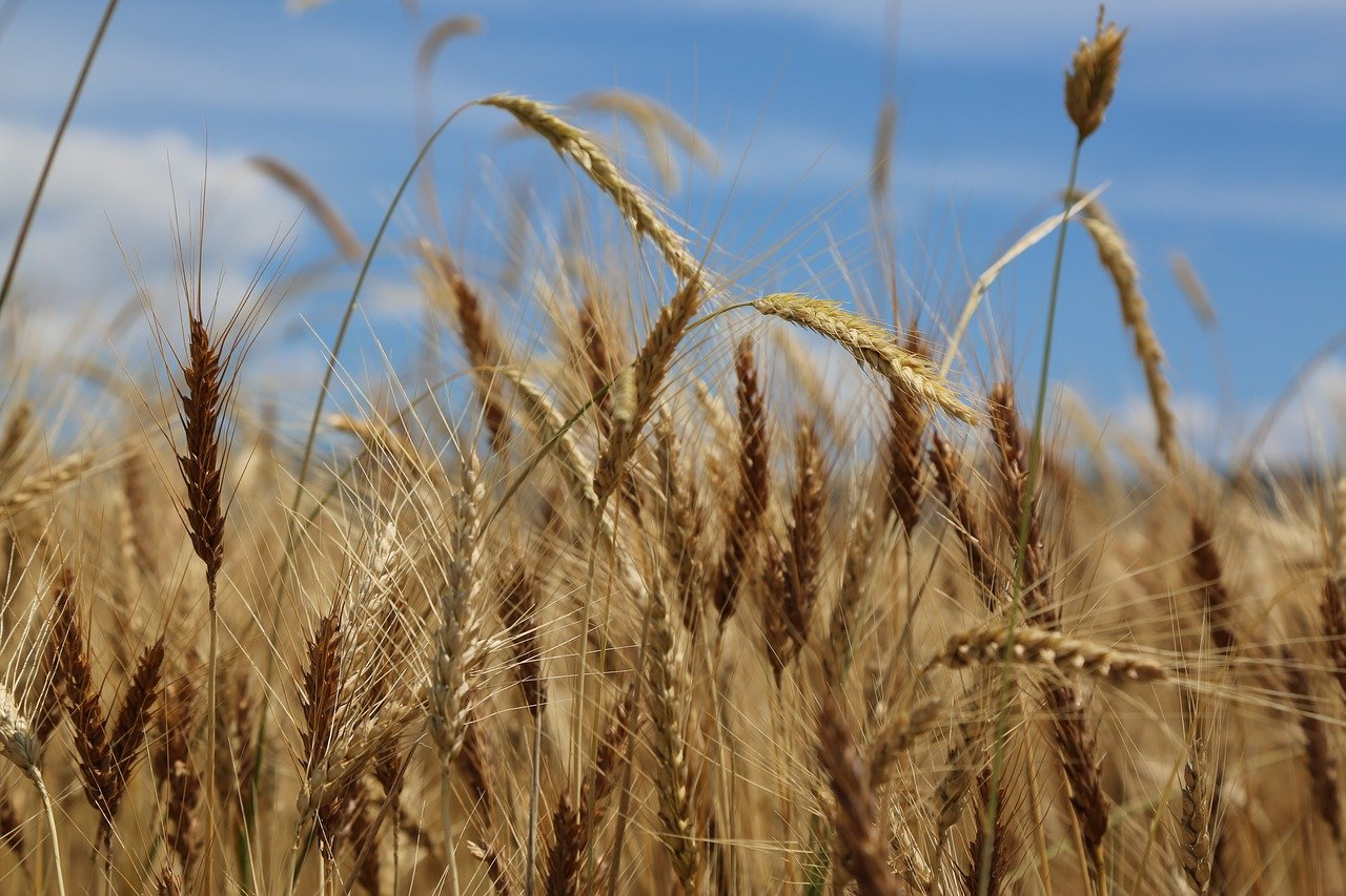 Zemědělci v létě bojovali se suchem. Stát jen mluví, ale nepomáhá, uvádí asociace - anotační obrázek