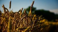 Zemědělci žádají kompenzaci za sucho. Po státu chtějí přes 2 miliardy - anotační obrázek