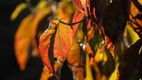 Předpověď počasí na noc a neděli 1. listopadu - anotační obrázek