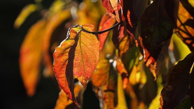 Předpověď počasí na noc a úterý 15. října. Poslední teplý den? - anotační obrázek