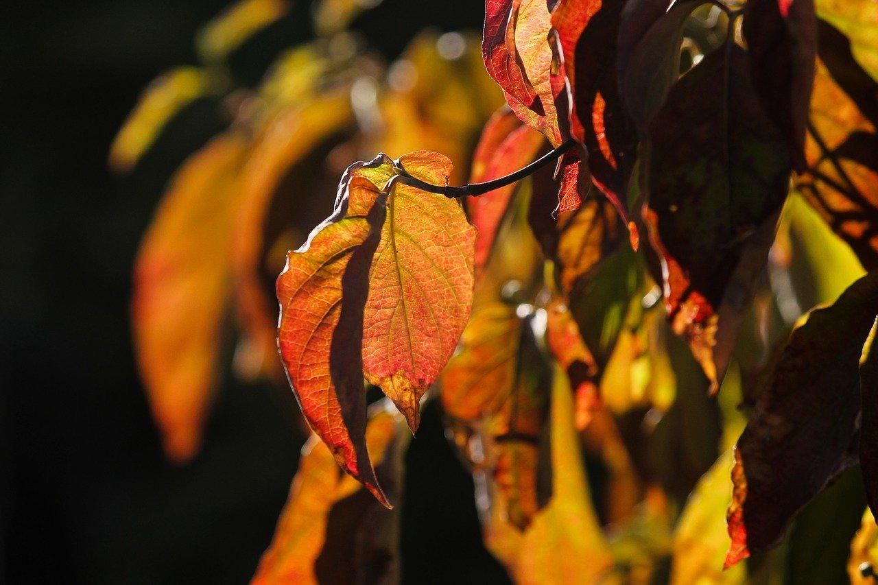 Předpověď počasí na noc a úterý 16. října - anotační obrázek