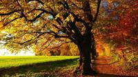 Babí léto zahřeje i v neděli. Předpověď počasí na 13. října - anotační obrázek