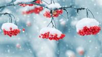 Předpověď počasí na noc a středu 12. prosince - anotační obrázek