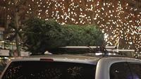 Vánoční stromek na střeše auta je smrtící projektil! - anotační obrázek