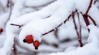 Kde bude sněžit? Předpověď počasí na noc a úterý 10. prosince - anotační obrázek
