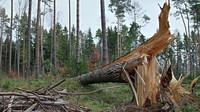 Vichřice opět zasáhne Česko. Meteorologové vyhlásili vysoký stupeň nebezpečí - anotační obrázek