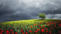 Krátké jaro, parné léto? Předpověď počasí ukazuje, kdy se prudce oteplí - anotační foto