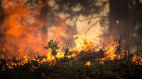 Kvůli suchu hrozí v celém Česku požáry. Praha zakázala ohně i kouření v parcích a zahradách - anotační obrázek