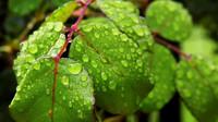 Teplé počasí naruší déšť a bouřky. Předpověď na noc a čtvrtek 2. července - anotační obrázek