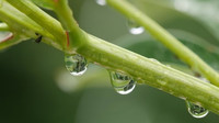Extrémně silný déšť je za námi? Předpověď počasí na noc a pátek 24. května - anotační foto