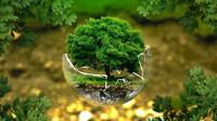 Bojujete proti změnám klimatu? Snižte svoji uhlíkovou stopu - anotační obrázek