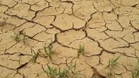 Navzdory dešťům sucho stále trvá. Jak efektivně šetřit vodou? - anotační obrázek