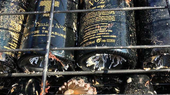 Crusoe Treasure (španělské vinařství)