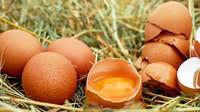 Zakázaný insekticid DDT našli veterináři při kontrole BIO vajec - anotační obrázek