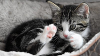Milujete kočky? Váš domácí mazlíček nosí smrt, varují vědci - anotační foto