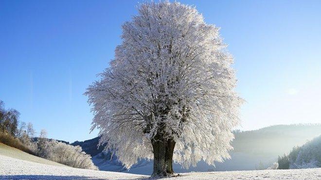 Bude sněžit. Předpověď počasí na noc a čtvrtek 12. prosince - anotační obrázek