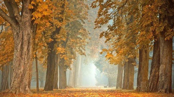 Na zimní počasí si musíme počkat. Předpověď na noc a úterý 19. listopadu - anotační obrázek