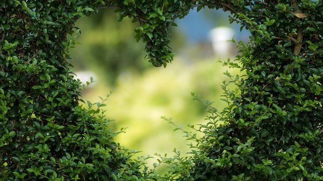 Lidé nejčastěji umírají na nemoci srdce a rakovinu - anotační obrázek
